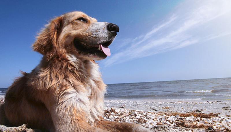 Toscana-pet-friendly-proteggi-il-tuo-cane-da-caldo,-sole,-spiaggia