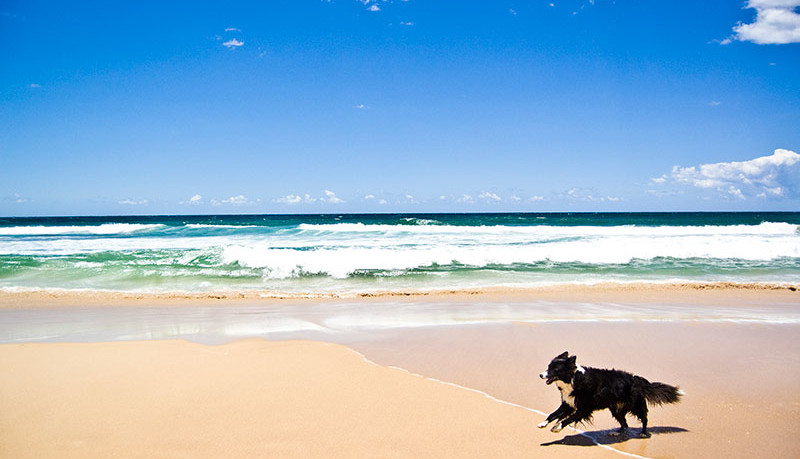 Toscanapetfriendly-Le-spiagge-petfriendly-in-Toscana