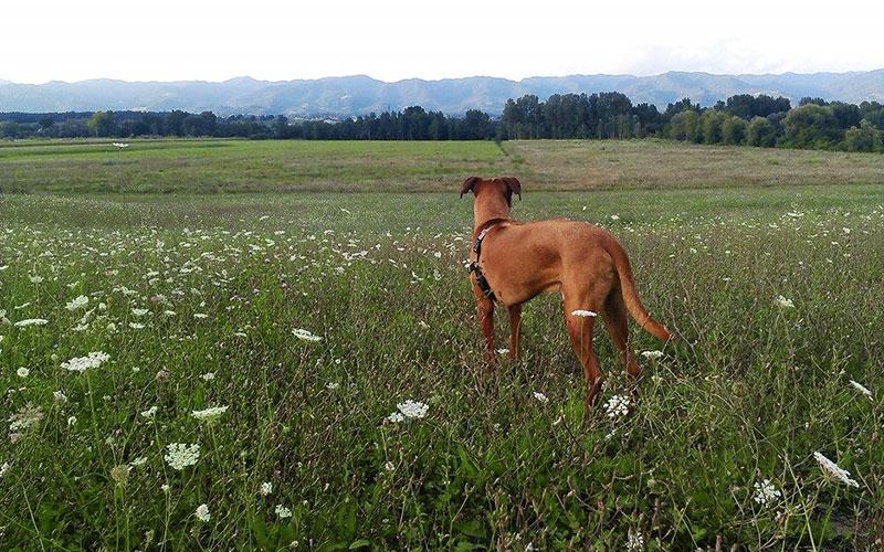 Come comportarsi se in campagna incontrate altri animali