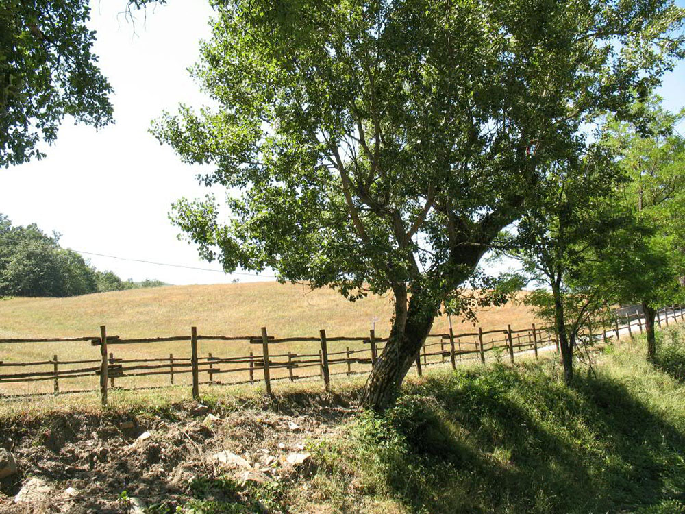 Toscana-pet-friendly-mugello