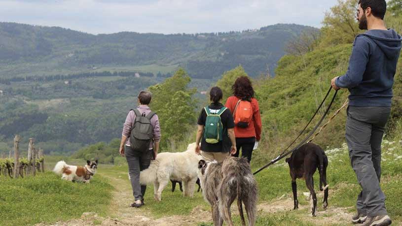 Dog Trekking nella natura
