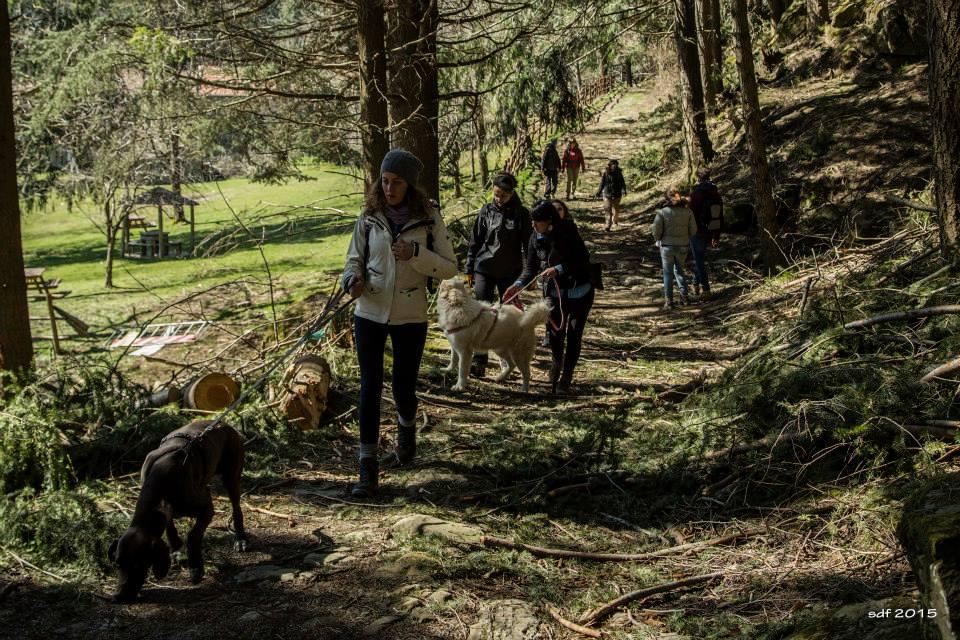 Dog trekking delle castagne a Monte Senario