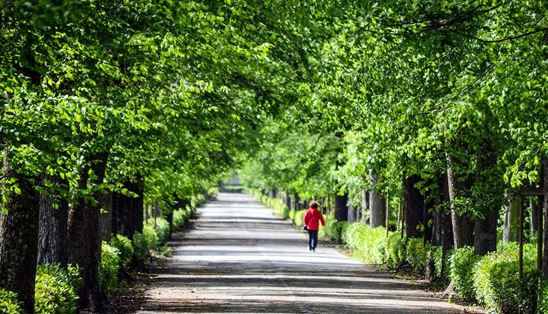 Toscanapetfriendly-Vacanze-giocare-a-frisbie-nel-parco-delle-cascine
