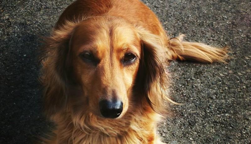 foto benessere cani