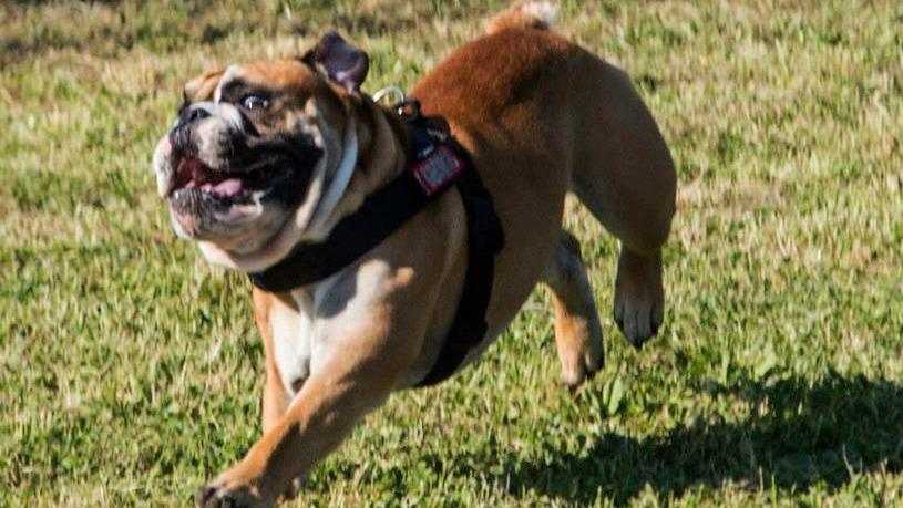 Dog dance ed educazione di base con AbcDog